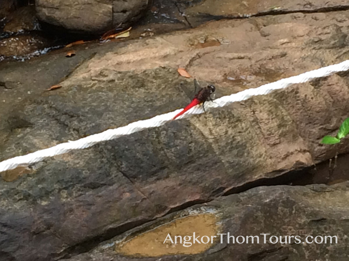 Dragonfly On Path Ropes Kbal Spean
