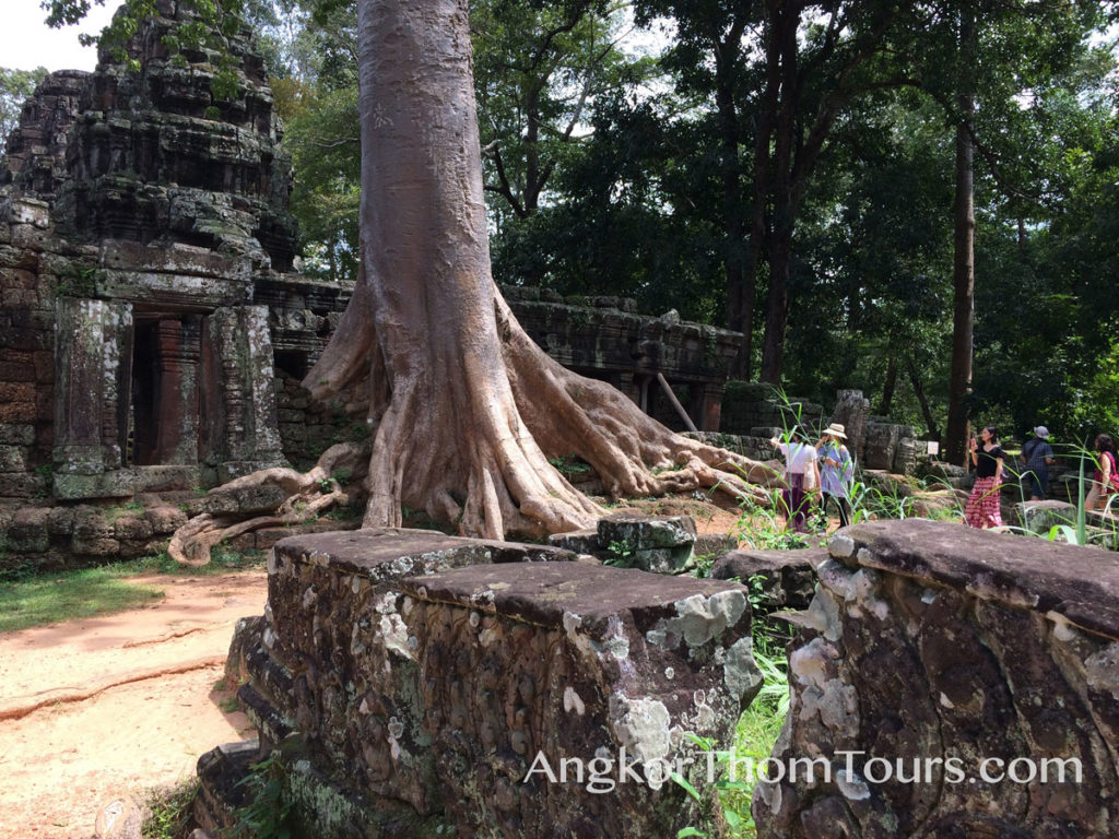 Massive Tree At The Main Temple