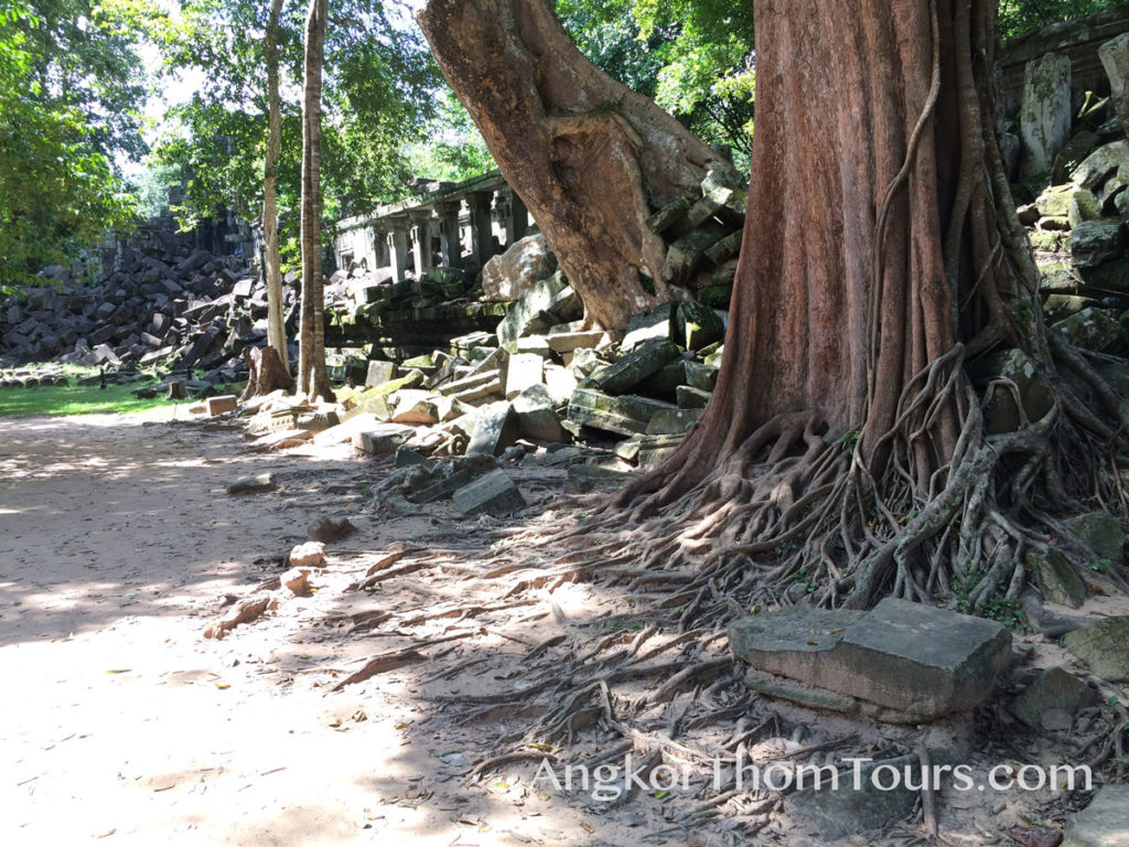 Massive Trees At Beng Mealea Growing Through Outer Walls