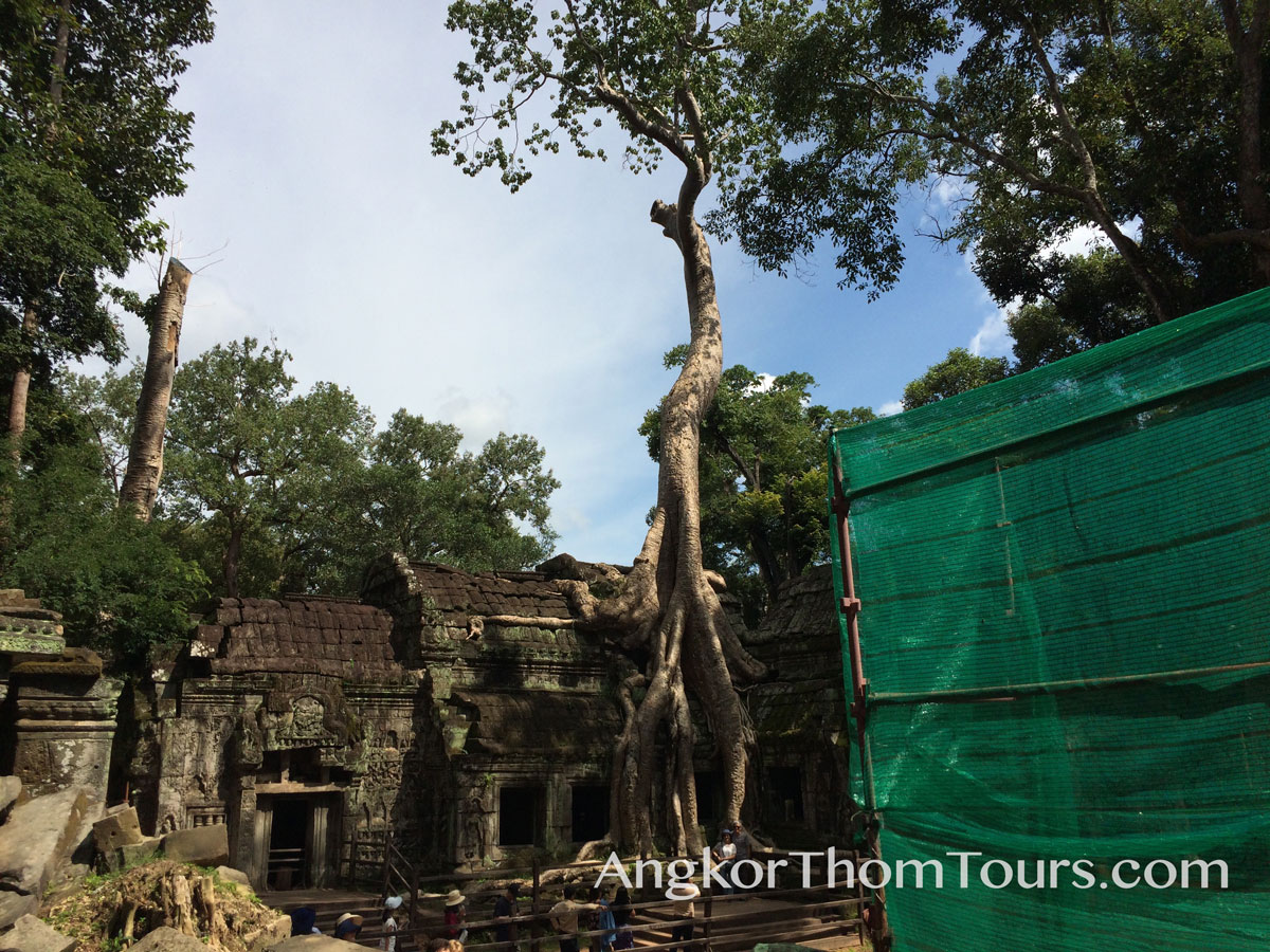 Showing First Inner Ring Tree Root To Crown Ta Prohm