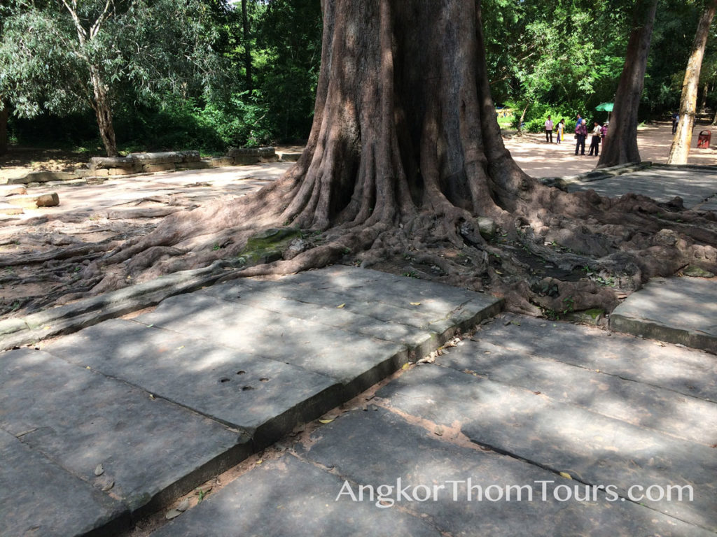 Showing Roots Growing Through Causeway Ta Prohm